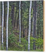 Aspens In The Woods Wood Print