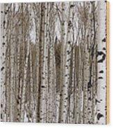 Aspens In Winter Panorama - Colorado Wood Print