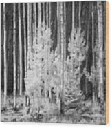 Aspens Ir 0713 Wood Print