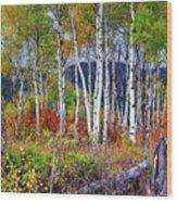 Aspens Meet Autumn Wood Print