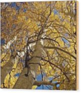 Aspen's Reaching  Wood Print
