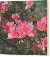 Aspired Azaleas Wood Print