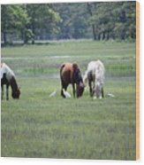 Assateague Island - Wild Ponies And Their Buddies  Wood Print
