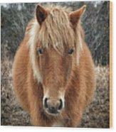 Assateague Island Horse Miekes Noelani Wood Print