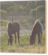 Assateague Island Wild Ponies Wood Print