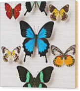 Assorted Butterflies Wood Print