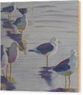 Assorted Gulls Wood Print
