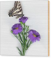 Aster And Butterfly Wood Print
