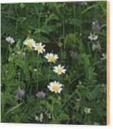 Aster And Daisies Wood Print