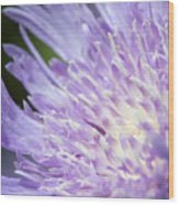 Aster Bloom Wood Print