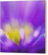 Aster Flower Wood Print