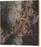 Asteroid Belt Wood Print