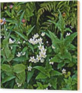 Asters And Fringed Grass-of-parnassus And Red Monkeyflowers On Highline Trail In Glacier National Pa Wood Print
