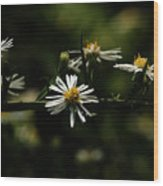 Aster's Branch Wood Print