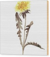 Asters Flowers, Abstract Flower Yellow Wall Decor, Dandelion Watercolor Painting Wood Print
