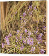 Asters In Autumn Wood Print