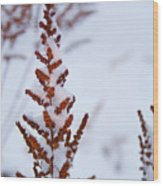 Astilbe Aglow In The Snow Wood Print