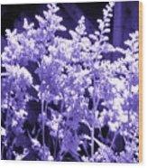 Astilbleflowers In Violet Hue Wood Print