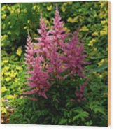 Astillbe In Light And Shadow Wood Print
