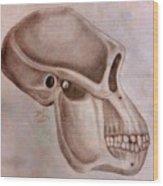 Astralopithecus Afarensis Cranium Wood Print