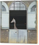 Asymmetrical Giraffe  Wood Print