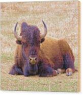 A Buffalo Staring Wood Print