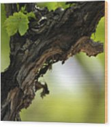 At Lachish Vineyard Wood Print