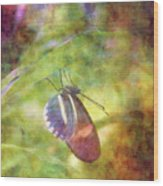 At Rest 8196 Idp_2 Wood Print