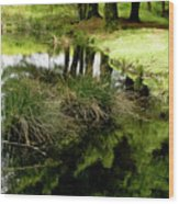 At The Edge Of The Forest Pond. Wood Print
