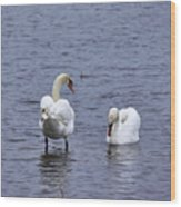At Your Service. Mute Swan Wood Print
