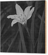 Atamasco Lily II Wood Print