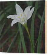 Atamasco Lily Wood Print