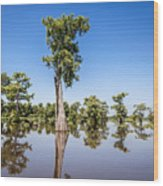 Atchafalaya Cypress Tree Wood Print