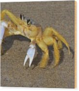 An Atlantic Ghost Crab Playing In The Tide 3 Wood Print