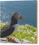 Atlantic Puffins, Fratercula Arctica Wood Print by Keenpress