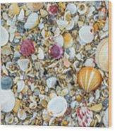 Atlantic' Shells Color Wood Print