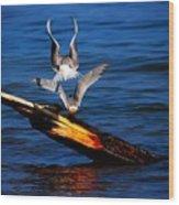 Atop A Tern Wood Print