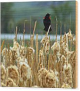 Atop The Cattails Wood Print