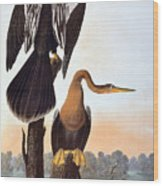 Audubon: Anhinga Wood Print