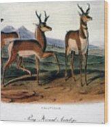 Audubon: Antelope, 1846 Wood Print