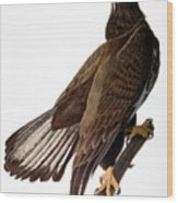 Audubon: Bald Eagle Wood Print