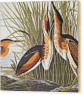 Audubon: Bittern Wood Print