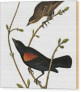 Audubon: Blackbird Wood Print