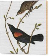 Audubon: Blackbird Wood Print