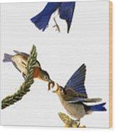 Audubon: Bluebird Wood Print
