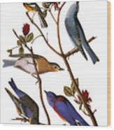 Audubon: Bluebirds Wood Print