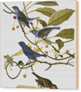 Audubon: Bunting, 1827-38 Wood Print