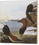 Audubon: Canvasback, 1827 Wood Print