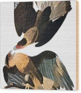 Audubon: Caracara, 1827-38 Wood Print