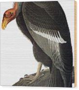 Audubon: Condor Wood Print